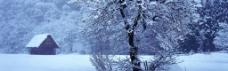雪景背景图片素材 (14)