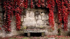 石墙红叶挂壁板凳封面大图