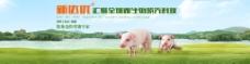 猪饲料网页首页轮播海报