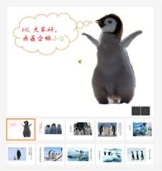 企鹅心声PPT模板