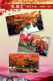 红枫展板图片