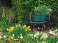 绿色清新花草丛树木图片