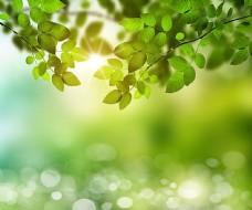 阳光绿叶光斑背景