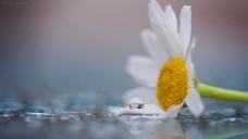 高清清新鲜花背景素材图
