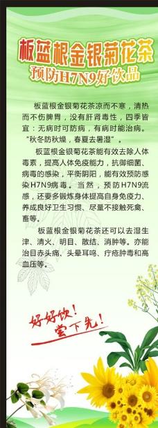 板蓝根金银菊花茶 预防H7N9图片