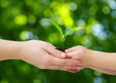 呵护关爱植物图片
