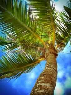 蓝天下的棕榈树