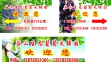 葡萄采摘園圖片