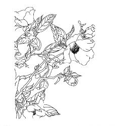茶油花图片