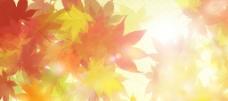 枫叶背景图片