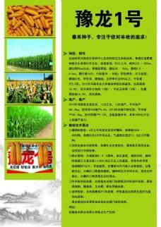 玉米种的彩页