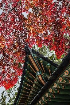 秋季红色的树叶