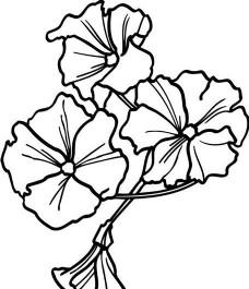 鲜花 花卉 矢量素材 eps格式_0015