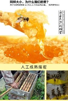 淘宝 蜂巢蜜 详情