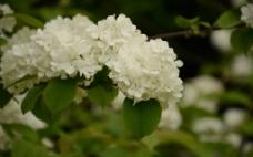 美丽花朵图片