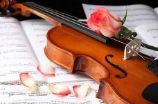 小提琴 乐谱 玫瑰花图片