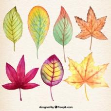 树叶的画图片
