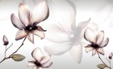 花卉 背景 装饰画图片
