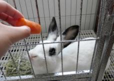 兔子照片图片