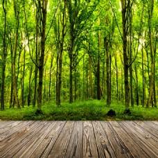 树林合成首图