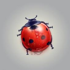 可爱瓢虫图片