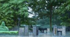 动画 言叶之庭图片