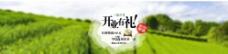 淘宝茶叶店开业促销海报psd图片