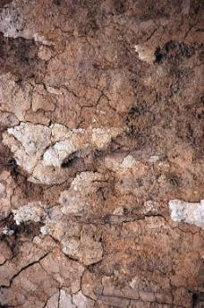 龟裂岩石贴图