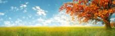 秋季背景图片高清PSD下载