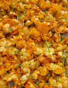 金莲花 晾晒中图片