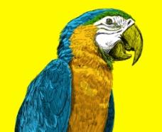 彩绘鹦鹉图片