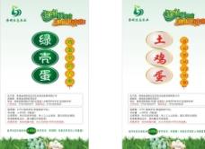 绿鸡蛋  土鸡蛋卡  宣传单图片