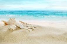 海边贝壳海星背景图
