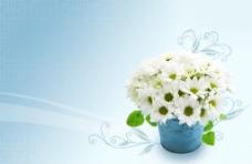 绿色盆栽花卉psd素材
