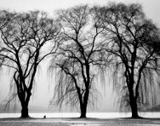 黑色感伤树木