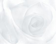 灰白花卉纹理图片