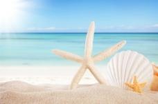 海滩海星贝壳海螺背景