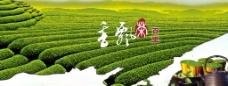茶语飘香图片