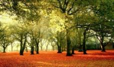 森林树木壁画(不分层)图片