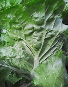 碧绿菜叶图片