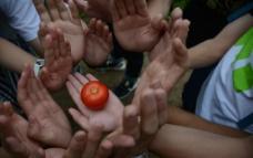 守卫番茄图片