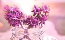 粉色花朵风信子图片