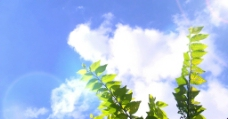 树叶 白云