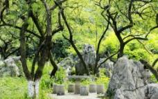 园林山石树木景观图片