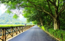 景区绿化道路图片