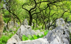 公园山石树木图片