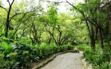 公园游园小路图片