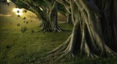 森林树木视频素材