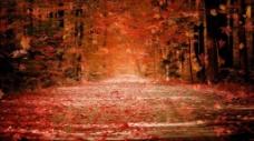 枫叶飘落 视频素材