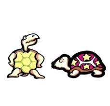 小乌龟图片